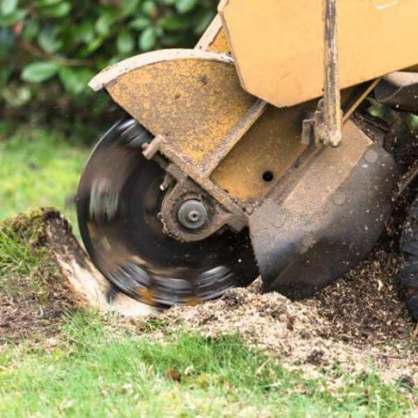 Stump Grinding Stump Removal Services Louisville