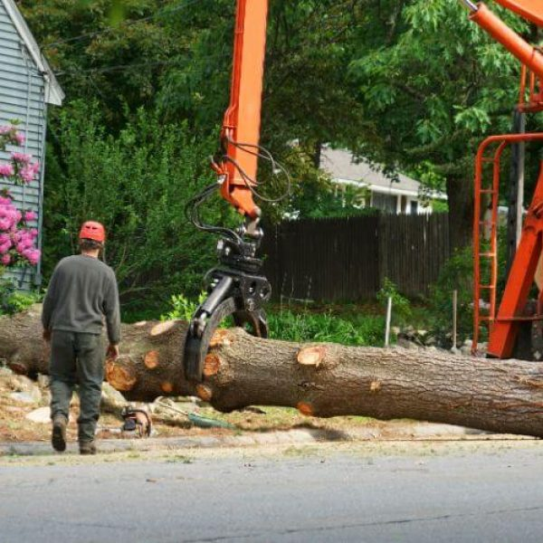 Tree Removal Services Louisville