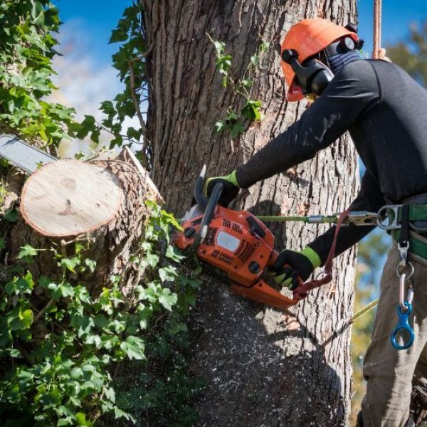 Tree Trimming Services Louisville