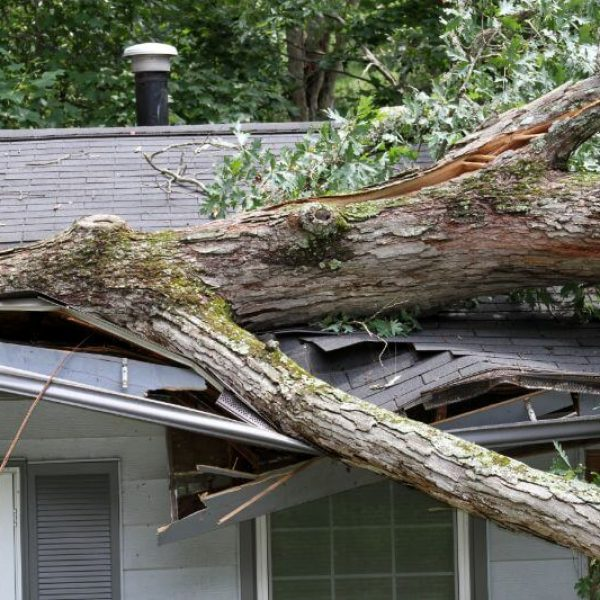 Emergency Tree Removal Louisville