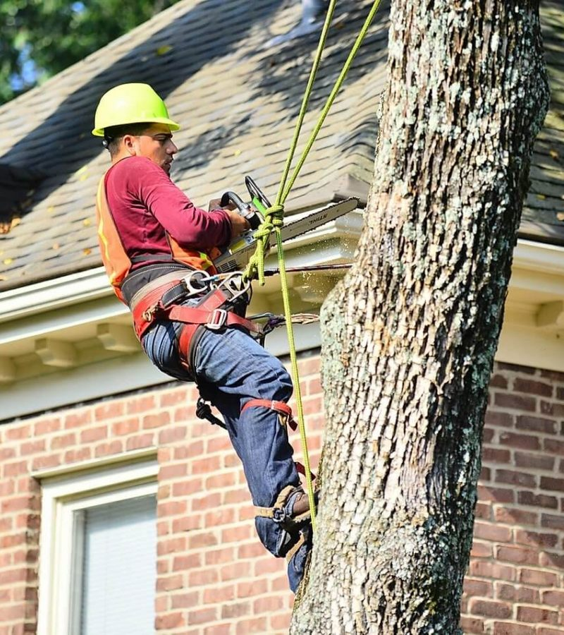Tree Removal & Trimming Louisville